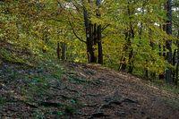 Forest path at Hoehengluecksteig, Oberpfalz, Hersbucker Schweiz, Bavaria