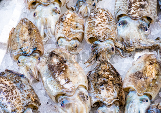 Cuttlefish in open seamarket