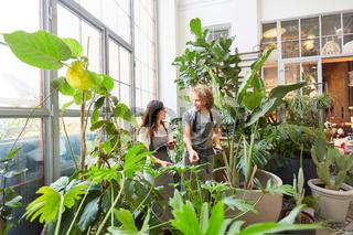 Floristen kontrollieren Wachstum von Grünpflanzen