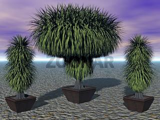 Kübelpflanzen mit buschigen Blättern