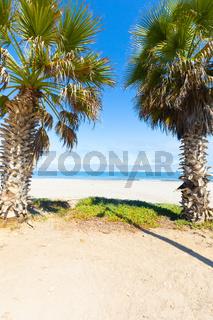 Chile La Serena palms on the beach