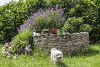 Kräutergarten mit zahlreichen Kräutern - Kräuterspirale und weisser Hund