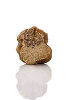 White truffle cross section.